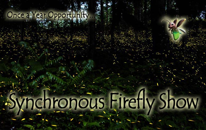 2015 2015 Fireflies in the Smokies