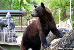 Bears, River Otters, Bobcats, Nocturnal House, Birds of Prey
