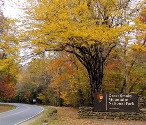 Thanksgiving in the Great Smoky Mountains National Park